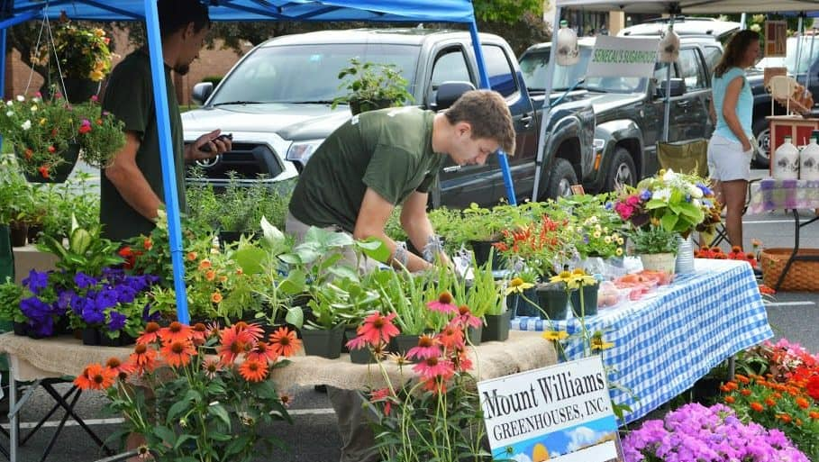Early summer flowers are in full bloom at the North Adams Farmers Market.