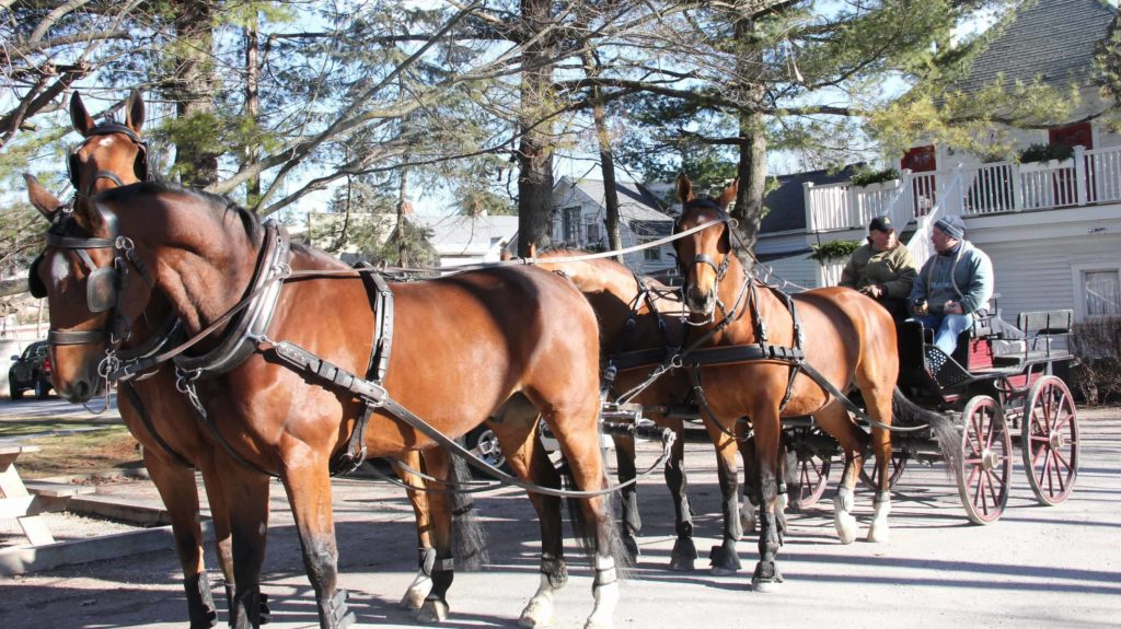 A coach and four horses wait for a parade in Lenox.