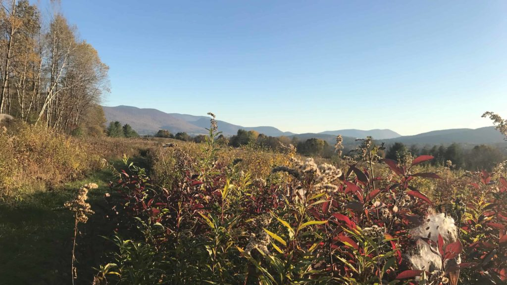 Mountain Meadow in Williamstown glows at sunset on a fall day.
